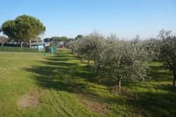 terreno agricolo con capanno